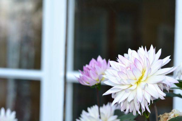 spiritualism, mediumskap, healing, hälsa och andlig filosofi