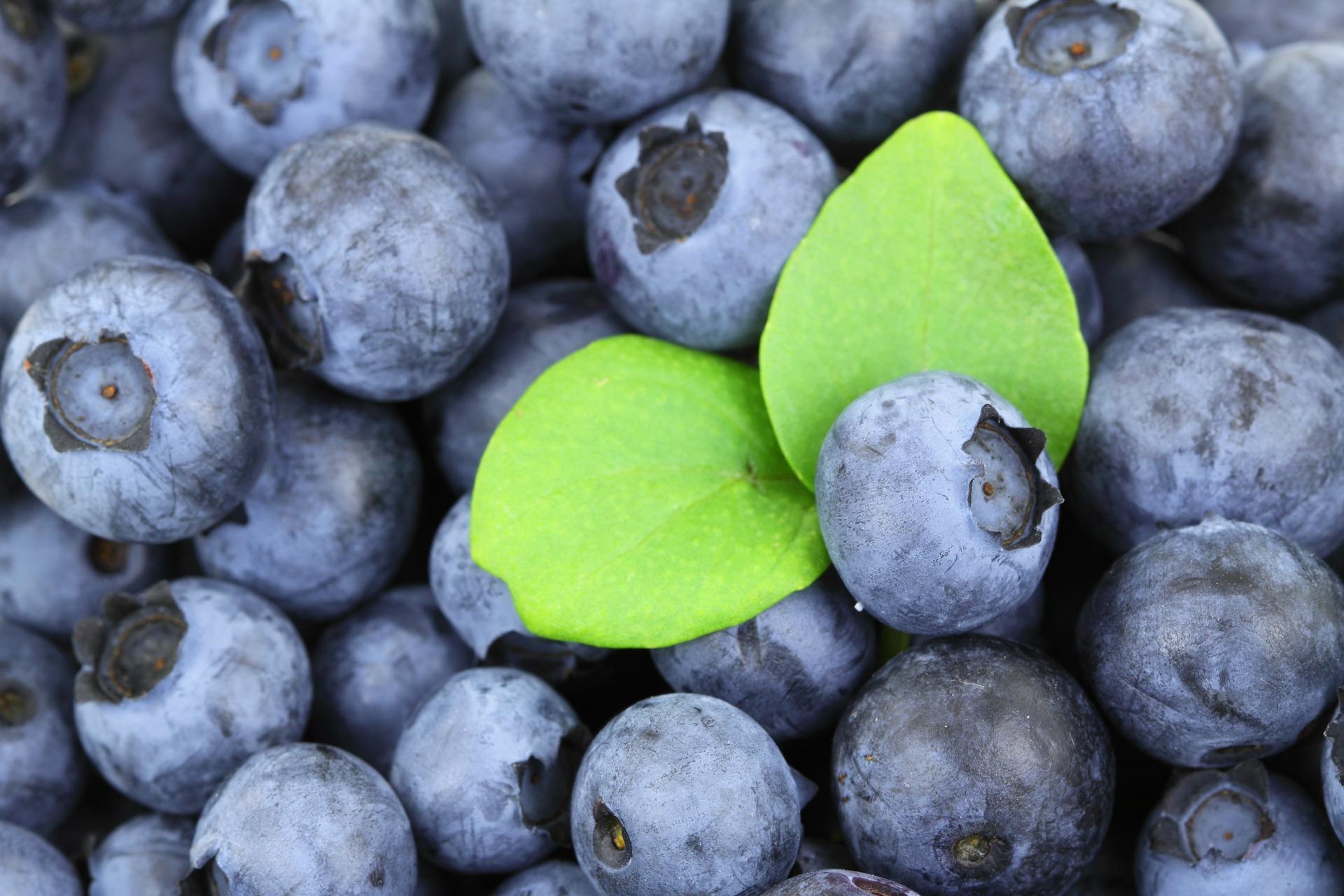 helande blåbär